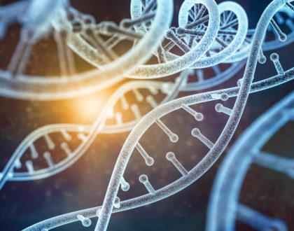 model of human DNA